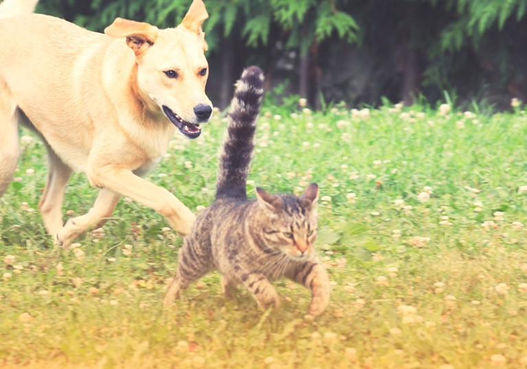 A dog and cat running in a garden together