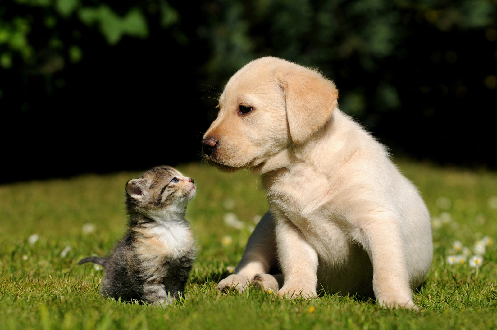 A puppy and a kitten sitting outside in a well kept garden on a sunny day