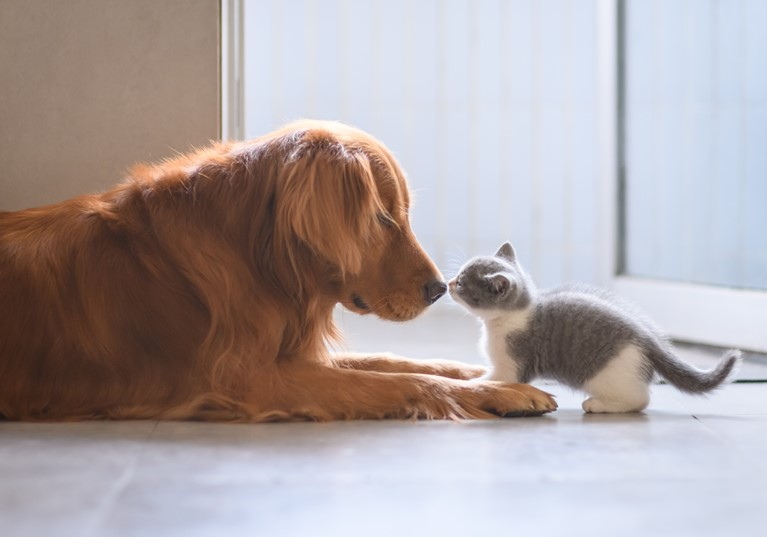A dog and a kitten meeting nose to nose in a kitchen