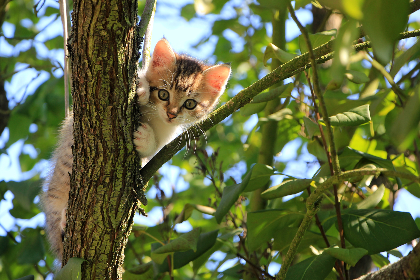 A young cat in a leafy tree