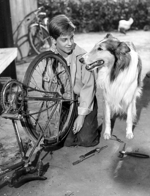 Tommy Rettig with Lassie Junior, son of Pal, the first Lassie, in the Lassie television series