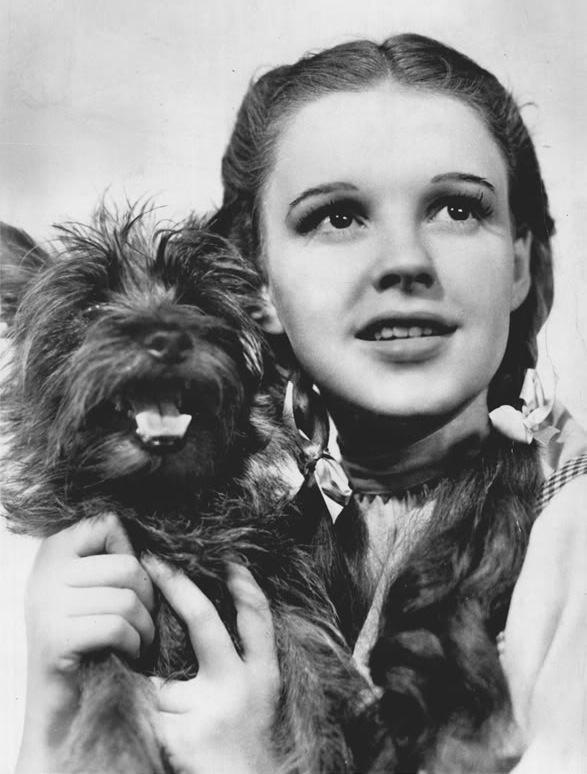 Toto with Dorothy in The Wizard of Oz