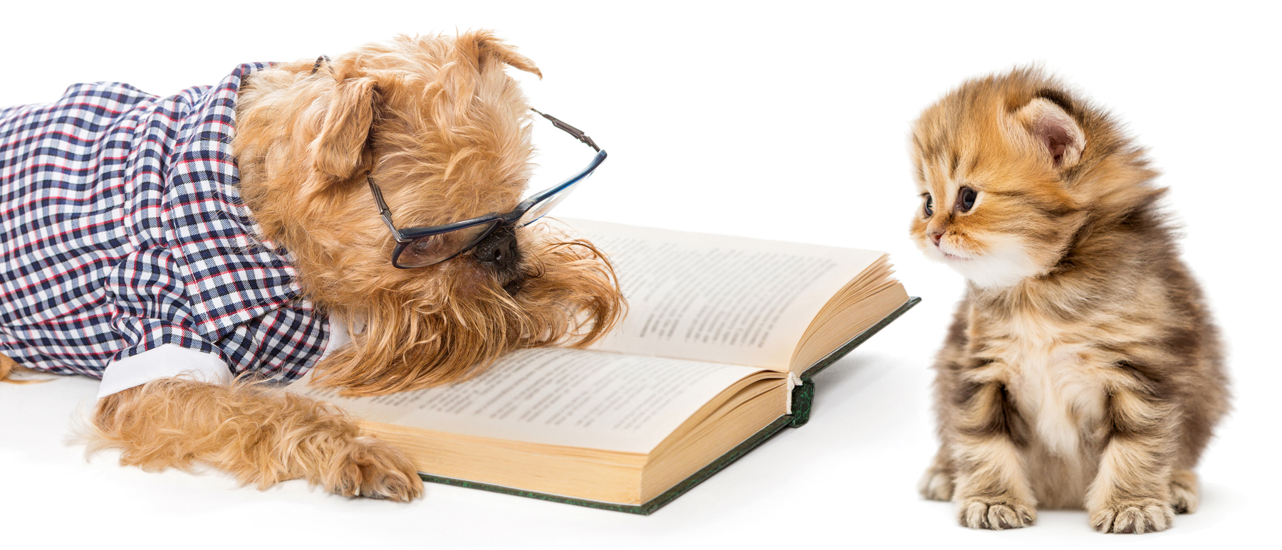 A dog in a shirt and glasses on reading a book to a kitten