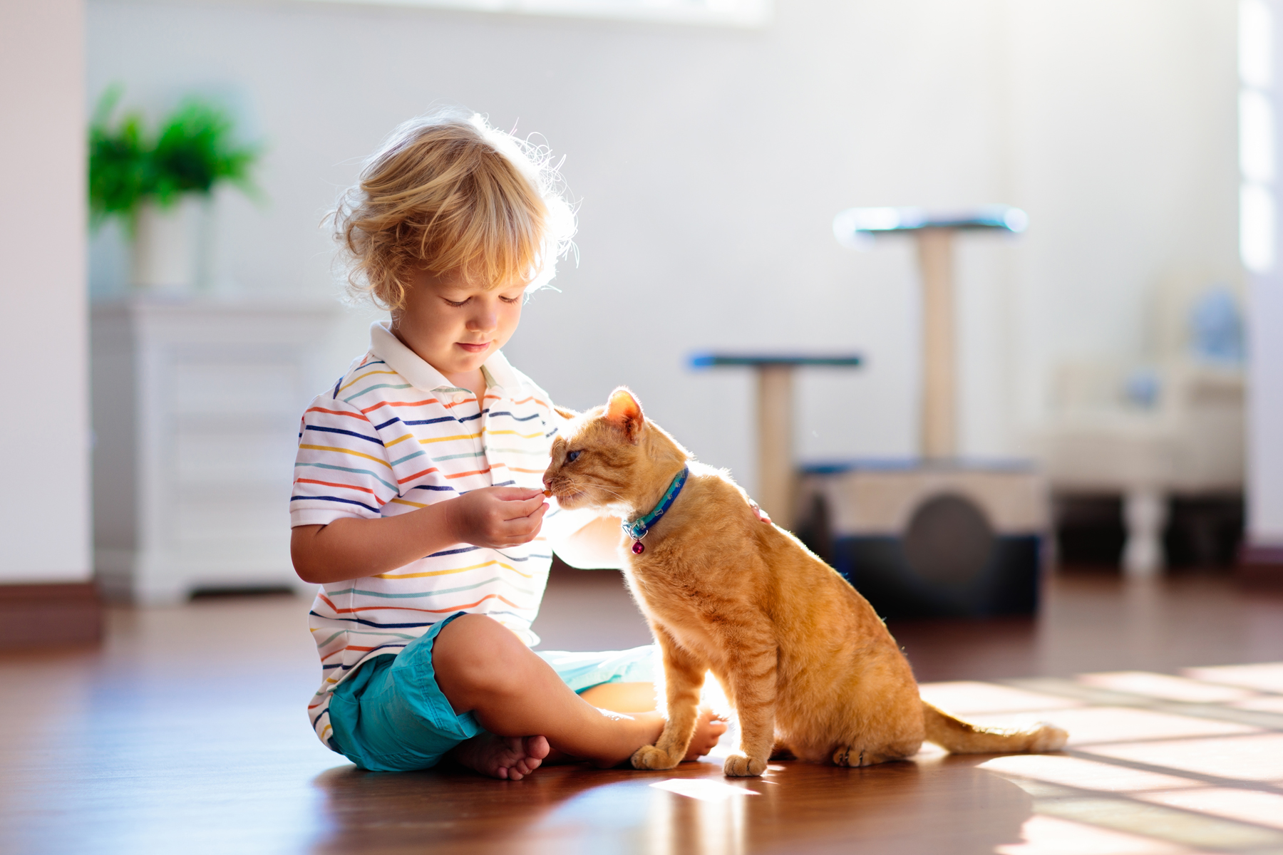 How to keep children safe around cats