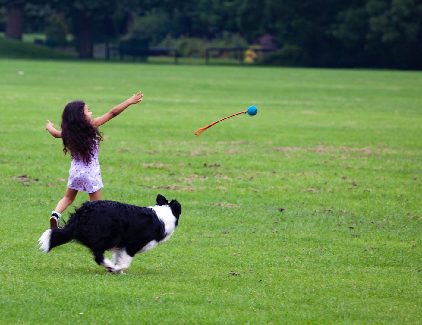 A child throwing a toy for her dog in a grassy field