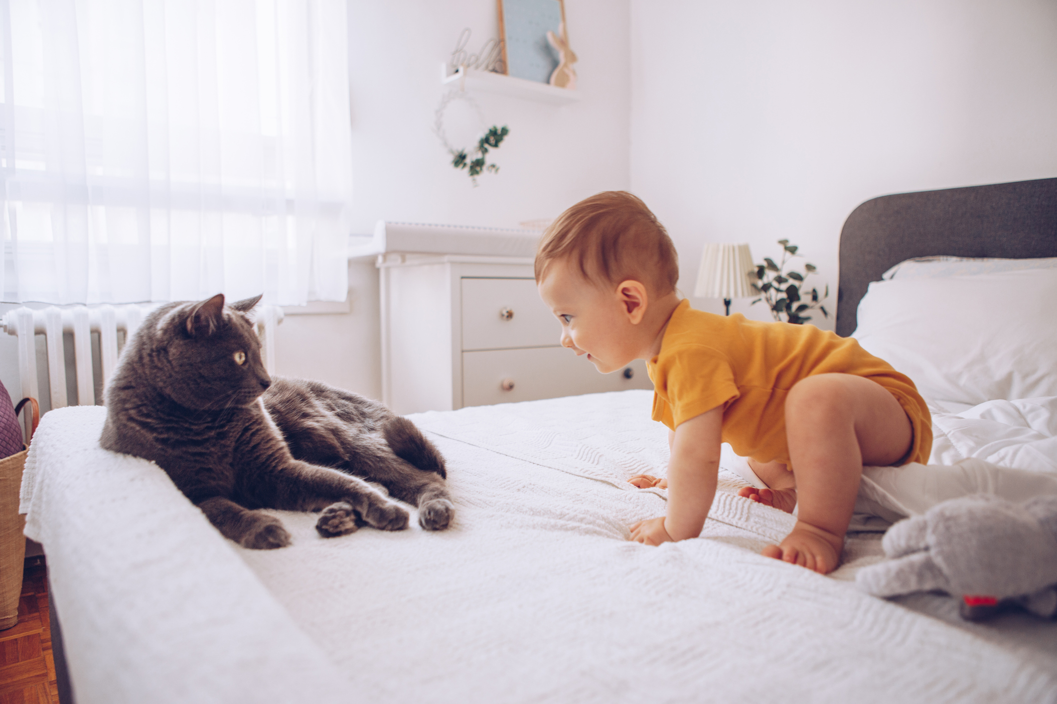 A baby crawling towards a cat on a bed