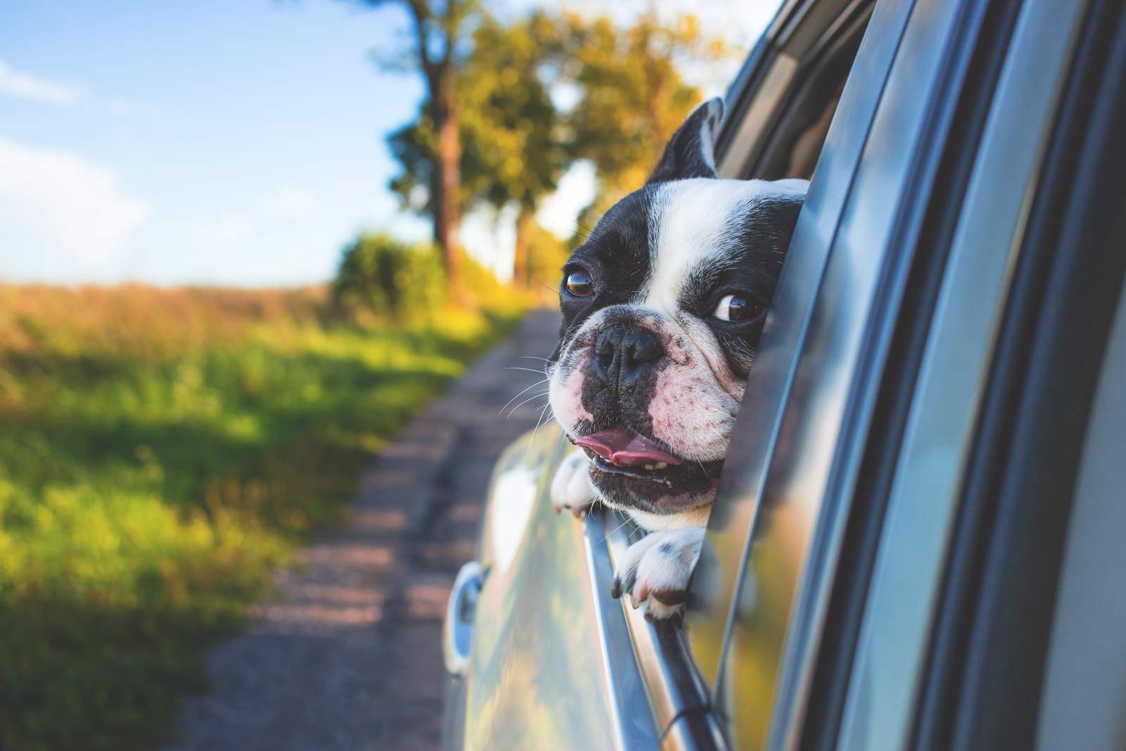 A dog looking out of a car window whilst travelling