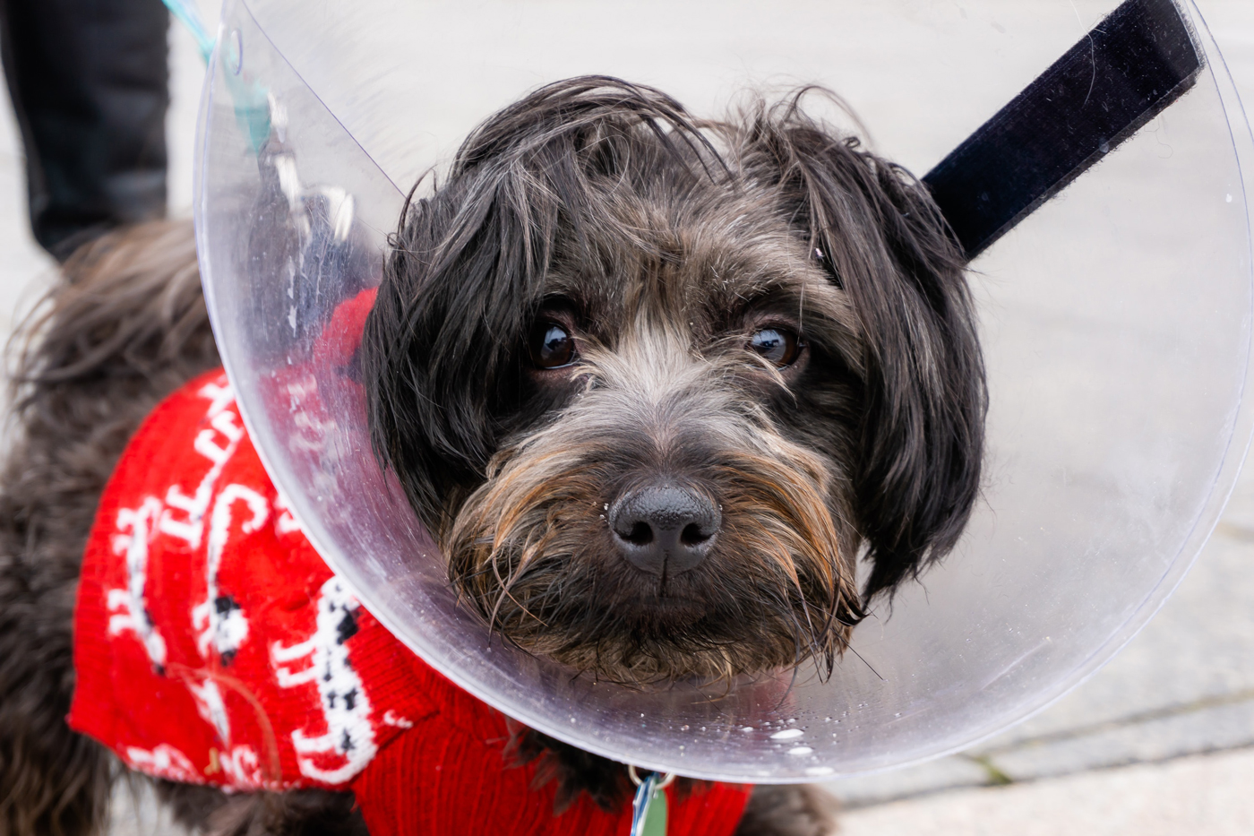 A dog wearing a jumper with a cone on