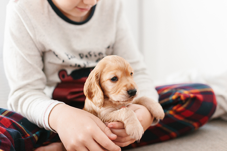 young boy cuddling his new puppy golden retriever