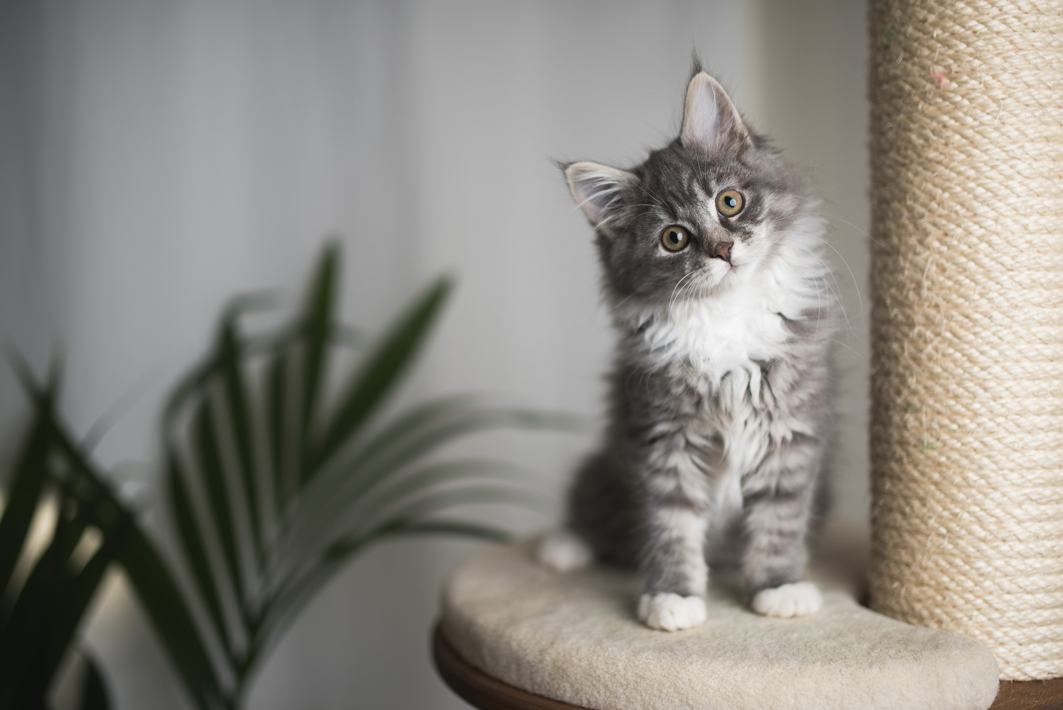 A kitten sitting on a ledge of a scratching post