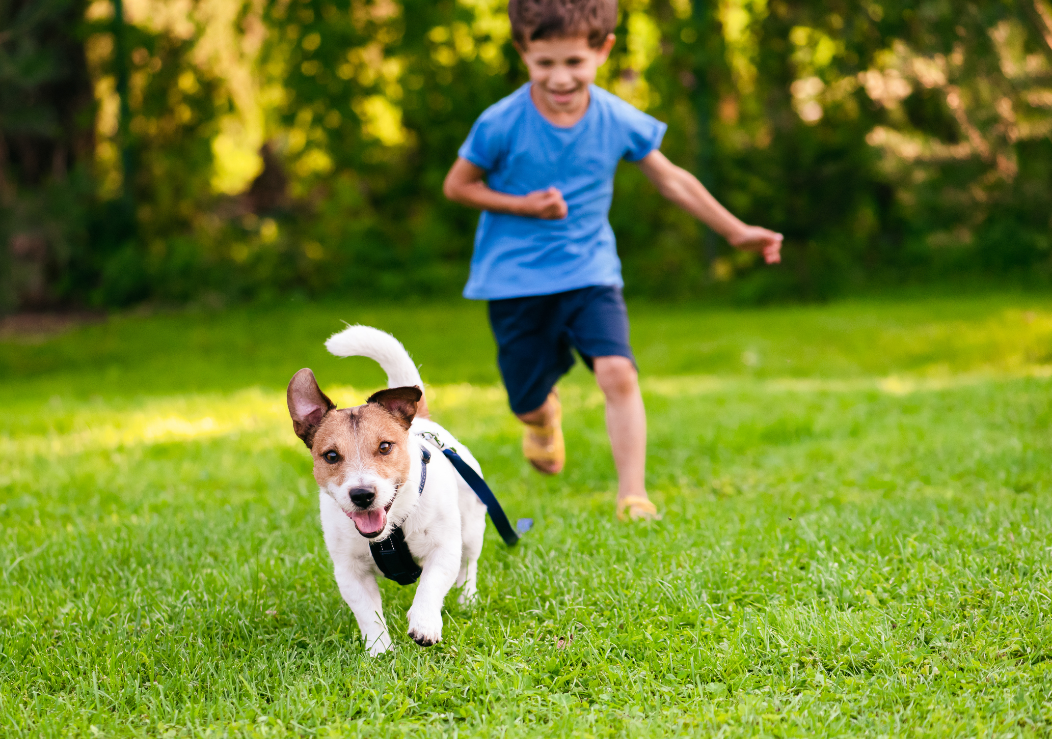 A child chasing a small dog across a grassy garden on a sunny day