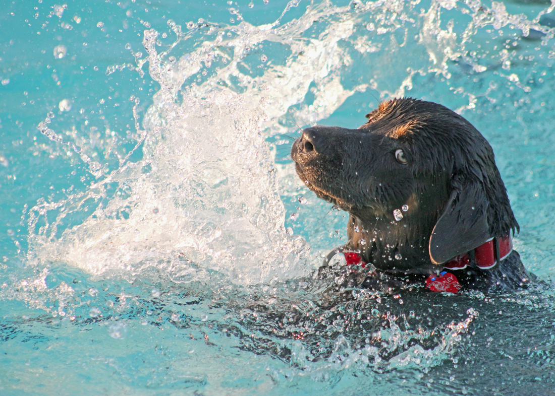 The benefits of hydrotherapy for dogs