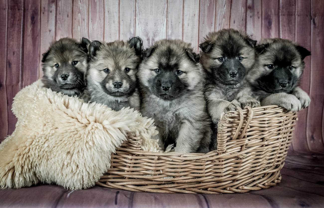 Top tips for successfully breeding a dog