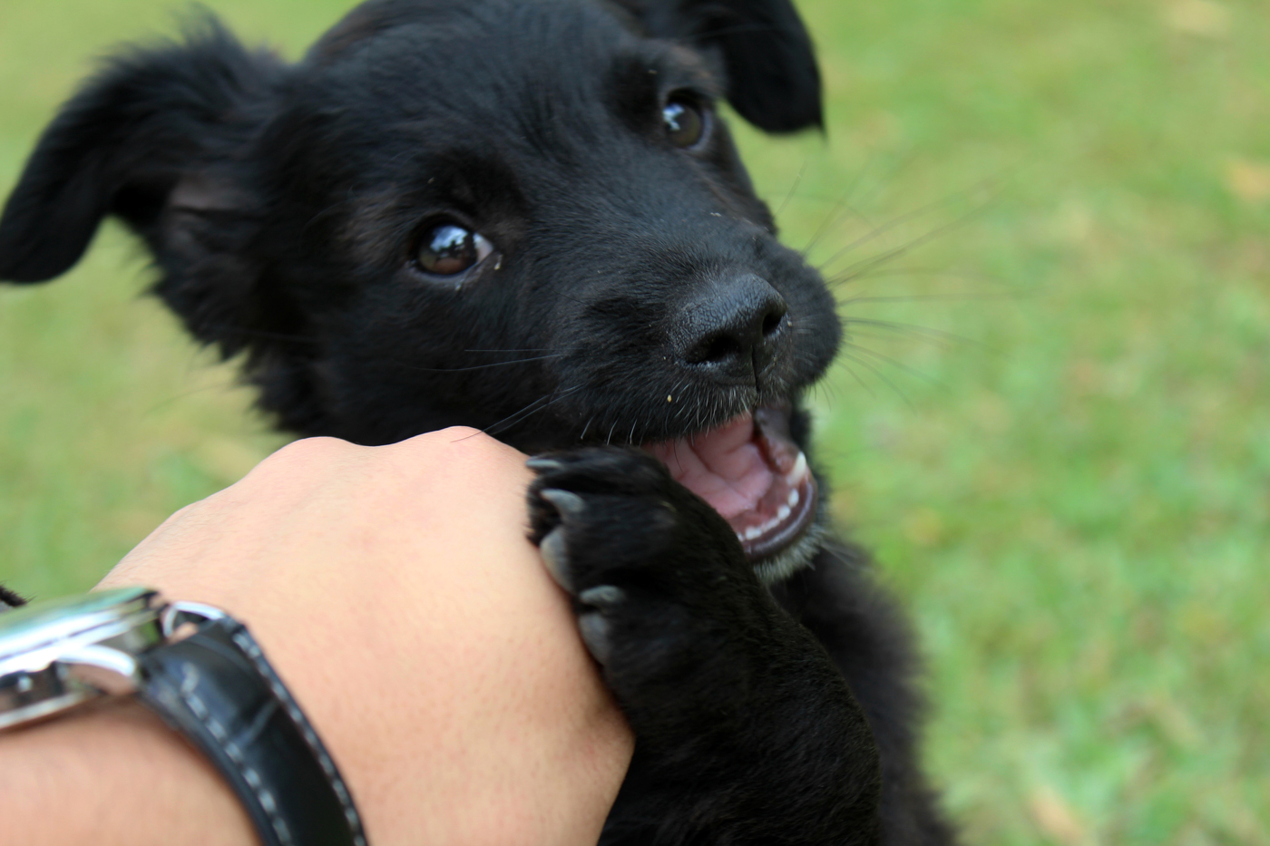 A puppy looking happy as it mouths its owners hand
