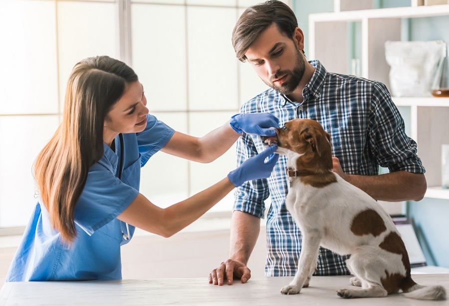 Vet Inspection