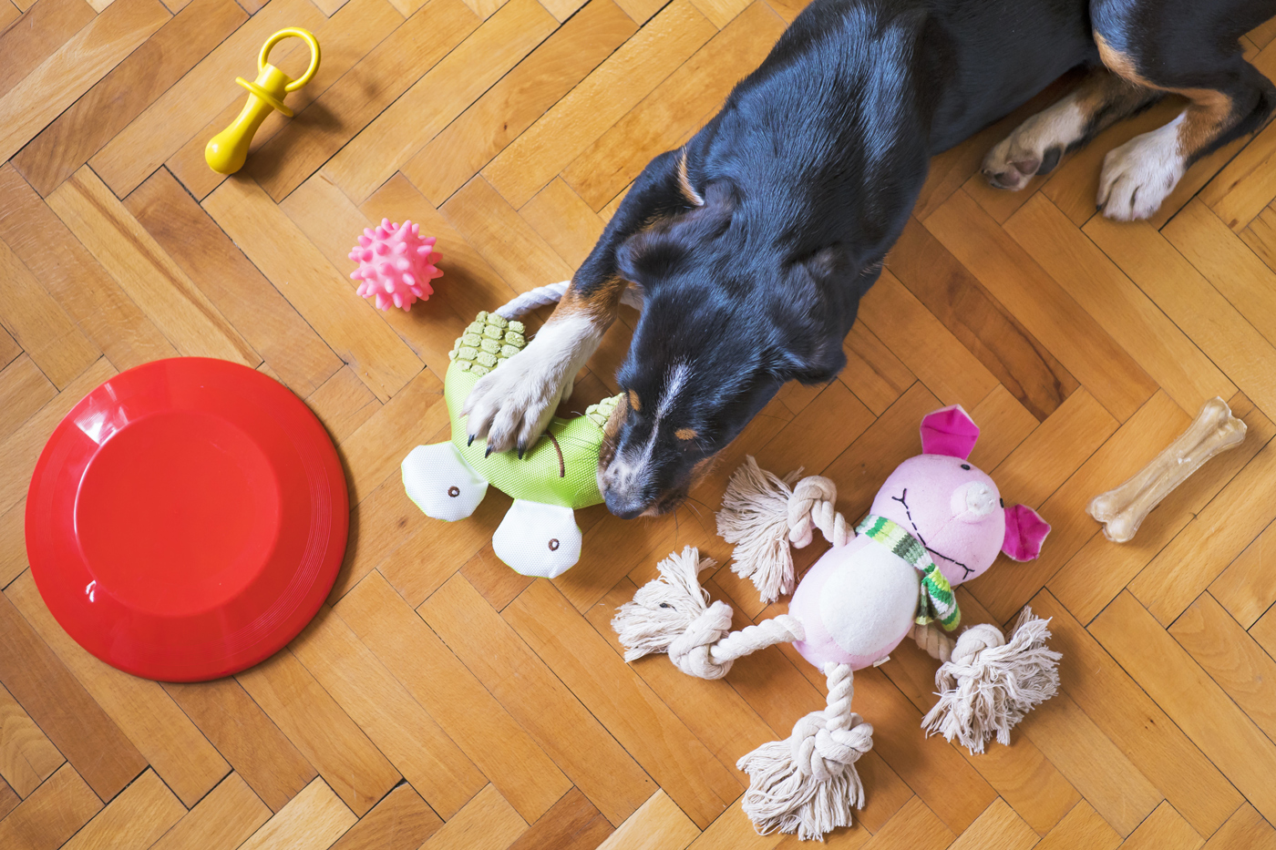 An overhead view of a dog surrounded by toys on a living room floor