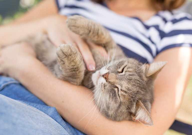 Only half of cats receive regular veterinary care