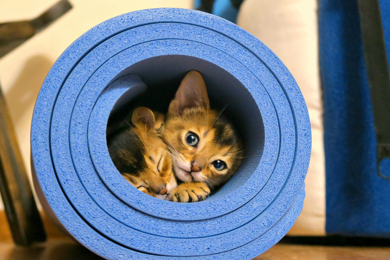 Two cats laying in a rolled up mat