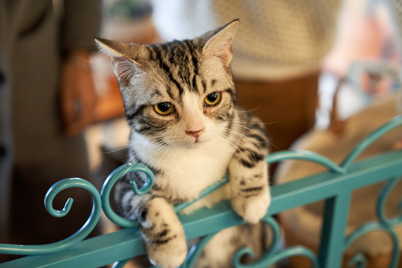 A cat with its paws over an indoor gate